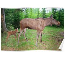 Eurasian Elk with Calf Poster
