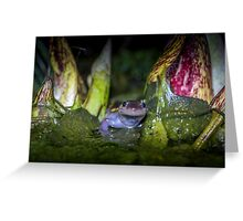 Marching Through Skunk Cabbage, Spotted Salamander (Ambystoma maculatum) Greeting Card