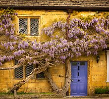 Wisteria and a purple door in the Cotswolds by Elana Bailey