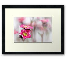 Sweet as candy... Framed Print