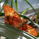 Flutter-by Butterfly by CapturedByKylie