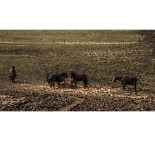 Horse Group Photographic Print