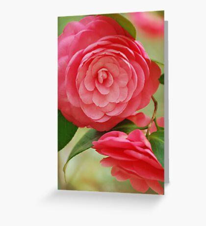 Camellia Greeting Card