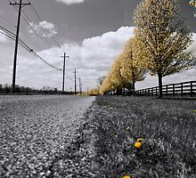 Road Home by Jim Semonik