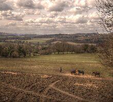Horses & Landscape by Andrew Pounder