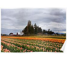 Barns and Tulips 2 Poster