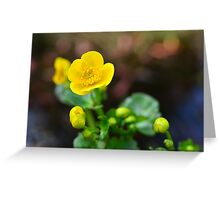 Kingcup in my garden Greeting Card