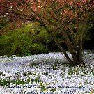 Spring Bushes Bloom by KellyHeaton
