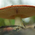 big toadstool by Glenda Williams