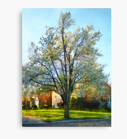 Late Afternoon in Spring Canvas Print