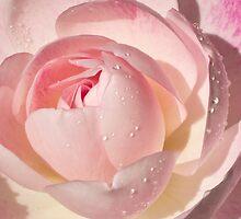 Pink Rose Greeting Card by Mariola Szeliga