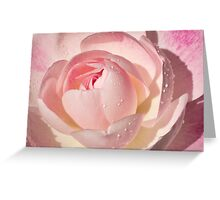 Pink Rose Greeting Card Greeting Card