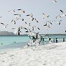 Seagulls by SandraWidner