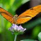 Butterfly with Both Looking Right At me by TJ Baccari Photography