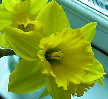 Daffodils Rejoicing by Kathryn Jones