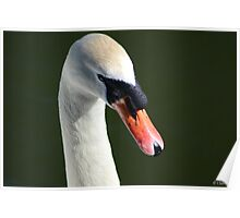 Galway Claddagh Swan Poster