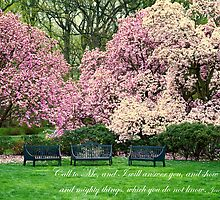Garden Benches in Spring by KellyHeaton