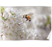 The Buzz In The Garden Poster
