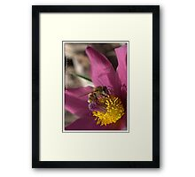 It's Bee Time (I've uploaded this 4 x and can't get it situated right) Framed Print