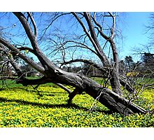 Rebirth in Sandy's Aftermath Photographic Print