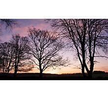 Autumn Trees  Photographic Print