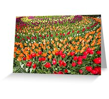 Rainbow of Tulips Greeting Card