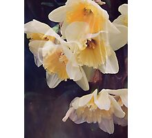 Dusky Yellows Photographic Print