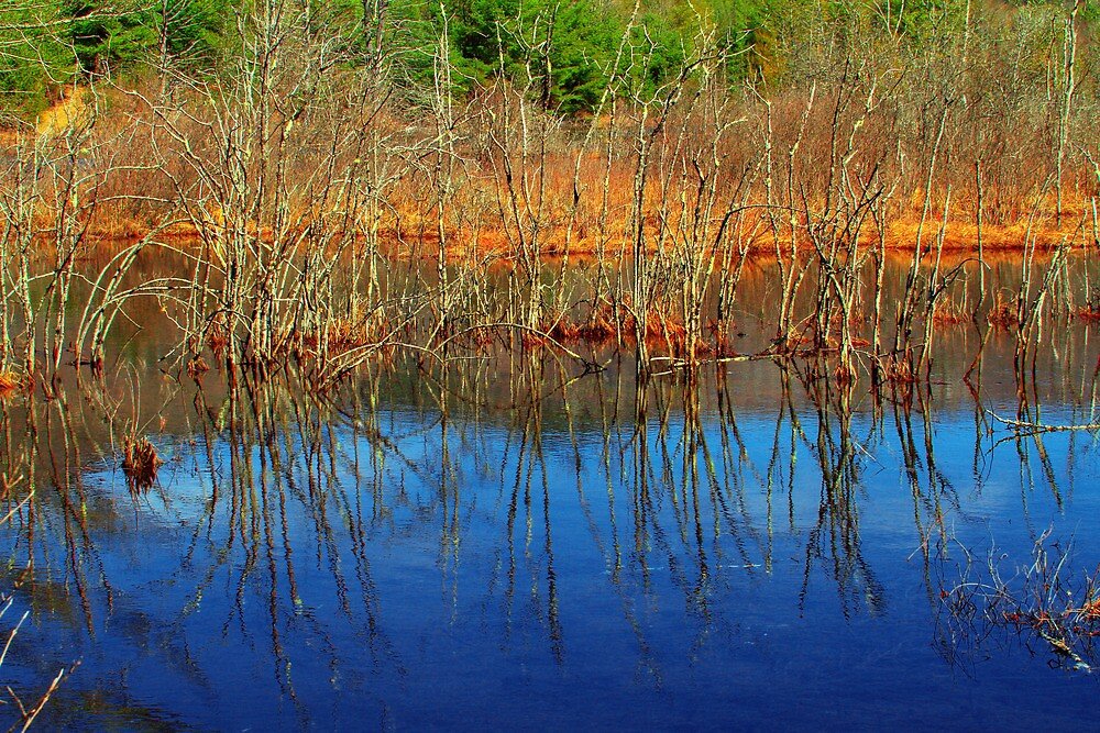 Swamp Colors by Nazareth