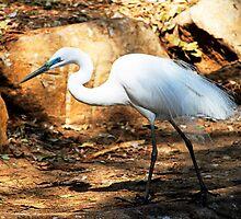 Egret by Evita