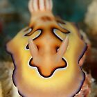 Nudibranch - Chromodoris coi by Andrew Trevor-Jones