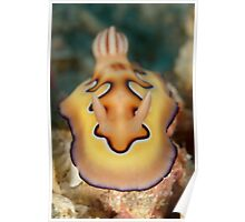 Nudibranch - Chromodoris coi Poster