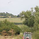 Hay making  by Pauline-W