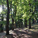 Wombat Botanical Gardens - Daylesford by Helen Greenwood