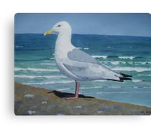 Seagull in Cornwall Canvas Print