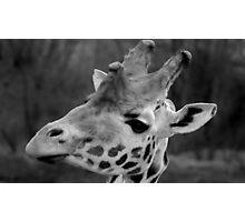 Giraffattitude Photographic Print