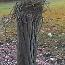 Fencepost Overcome by teresa731