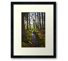 Scottish Woodland Stream Framed Print