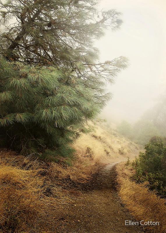 Diablo Morning Fog  by Ellen Cotton