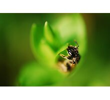 Green Color Photographic Print