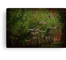 Turkeys. Canvas Print