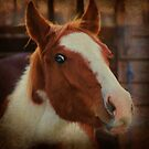 Rustic Colt by Ginger  Barritt