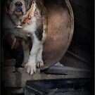 Farm Yard Dog by Ginger  Barritt