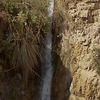 Water Fall At The Ein Gedi Oasis by Michael Redbourn