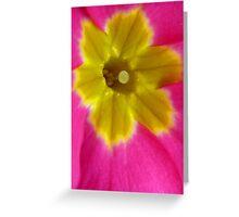 Pink and Yellow Primrose Macro Greeting Card