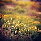 Secret Garden by FaireUnVoeu