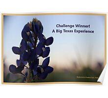 Banner - ABTE - Challenge Winner Poster