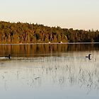 Loons at Sunset by msbpackengineer