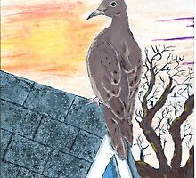 Mourning Dove on a Rooftop by zfollweiler