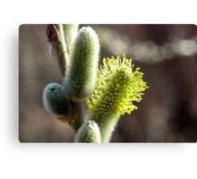 Finally In Bloom Canvas Print