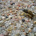 Wasp on the Sidewalk by lindsycarranza